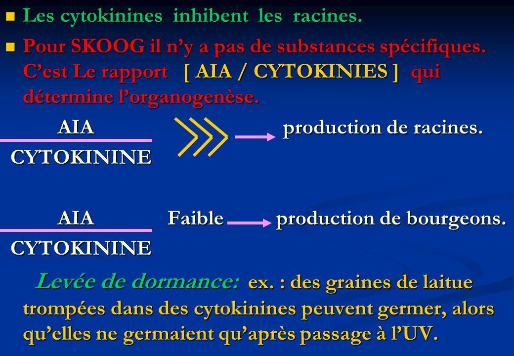 Les cytokinines inhibent les racines.
