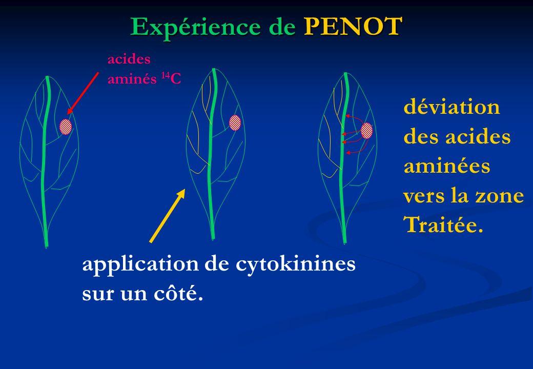 Expérience de PENOT déviation des acides aminées vers la zone Traitée.