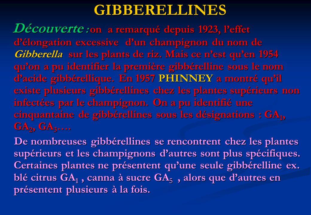 GIBBERELLINES