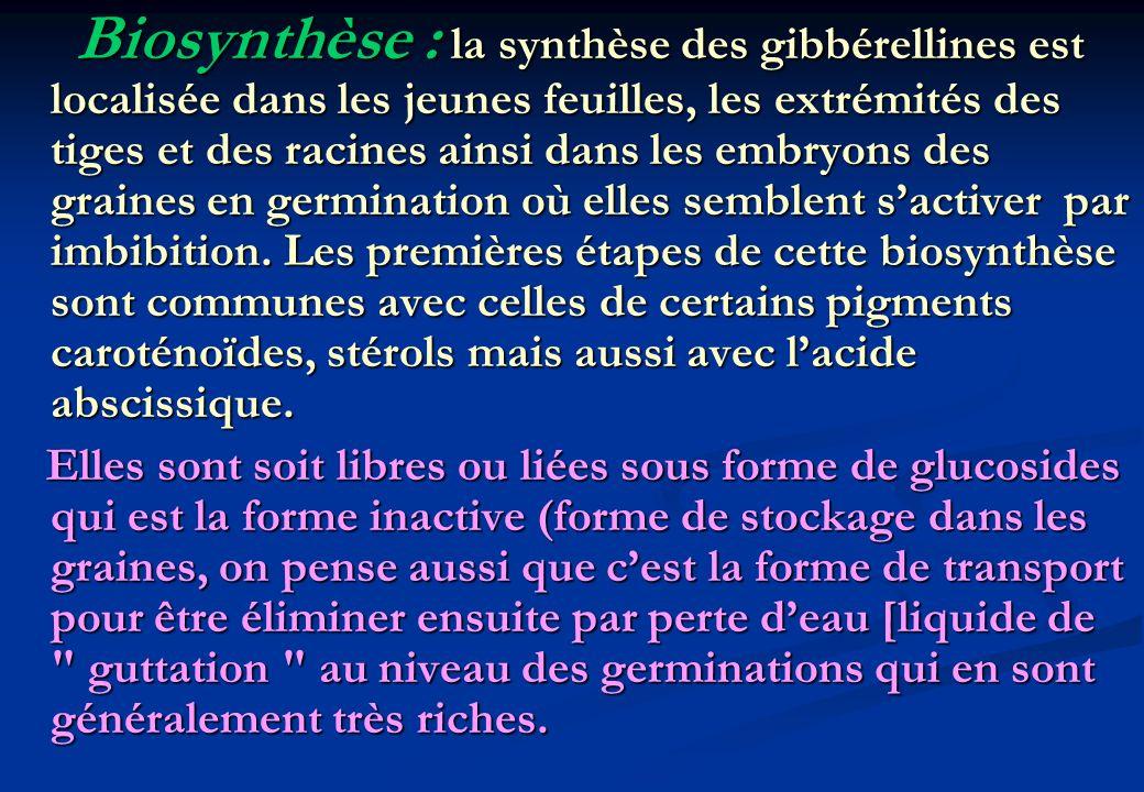 Biosynthèse : la synthèse des gibbérellines est localisée dans les jeunes feuilles, les extrémités des tiges et des racines ainsi dans les embryons des graines en germination où elles semblent s'activer par imbibition. Les premières étapes de cette biosynthèse sont communes avec celles de certains pigments caroténoïdes, stérols mais aussi avec l'acide abscissique.
