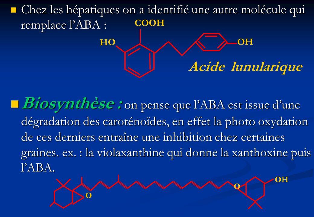 Chez les hépatiques on a identifié une autre molécule qui remplace l'ABA :
