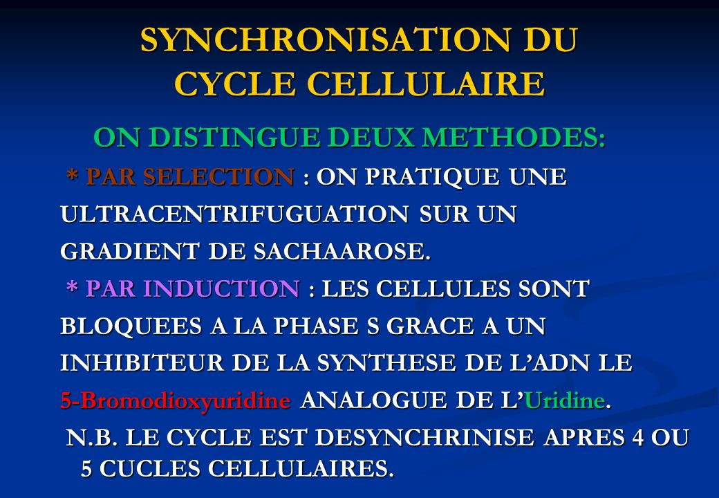 SYNCHRONISATION DU CYCLE CELLULAIRE