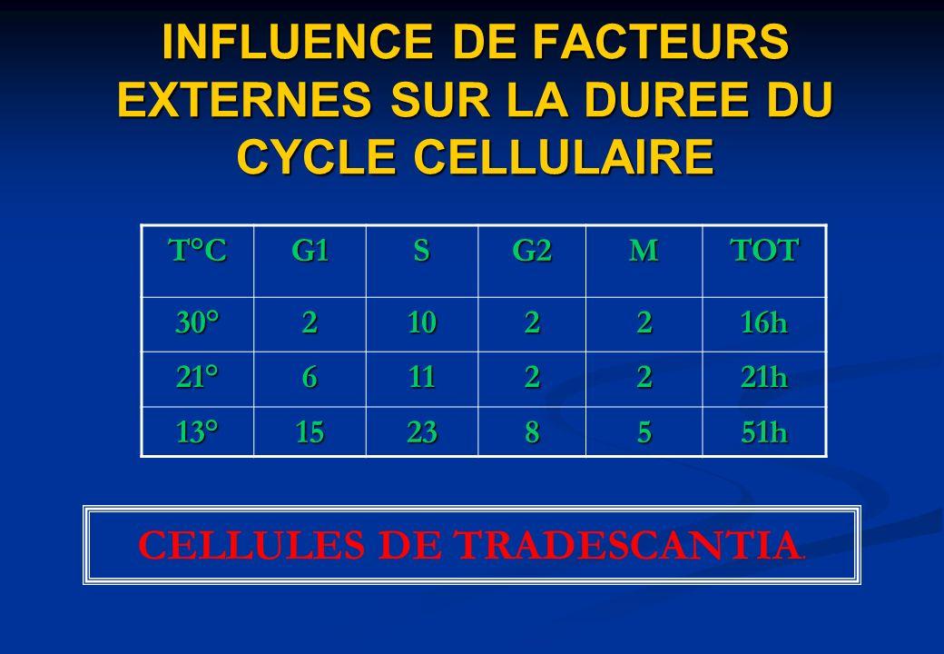 INFLUENCE DE FACTEURS EXTERNES SUR LA DUREE DU CYCLE CELLULAIRE