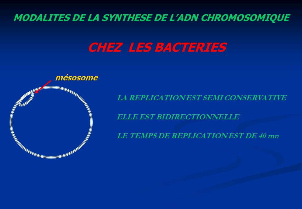 CHEZ LES BACTERIES MODALITES DE LA SYNTHESE DE L'ADN CHROMOSOMIQUE