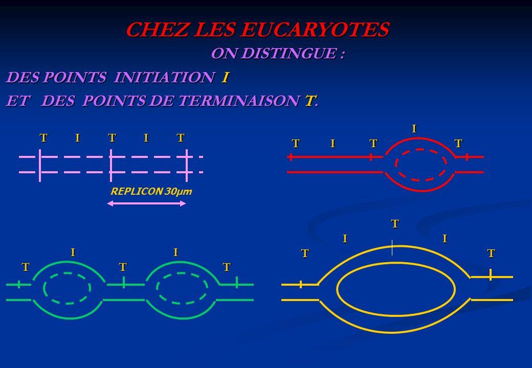CHEZ LES EUCARYOTESON DISTINGUE : DES POINTS INITIATION I ET DES POINTS DE TERMINAISON T. I. T I T T.