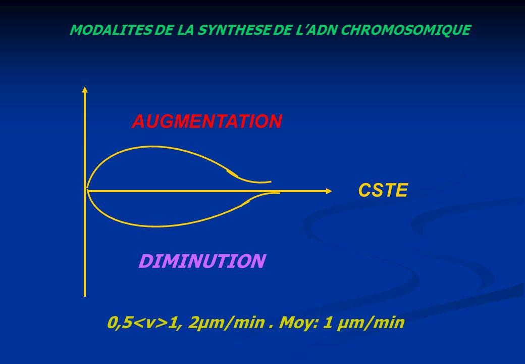 AUGMENTATION CSTE DIMINUTION 0,5<v>1, 2µm/min . Moy: 1 µm/min