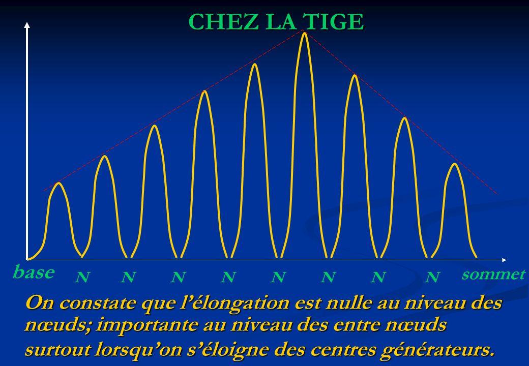 CHEZ LA TIGE base On constate que l'élongation est nulle au niveau des