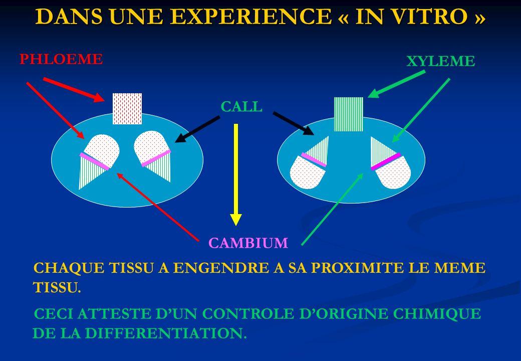 DANS UNE EXPERIENCE « IN VITRO »