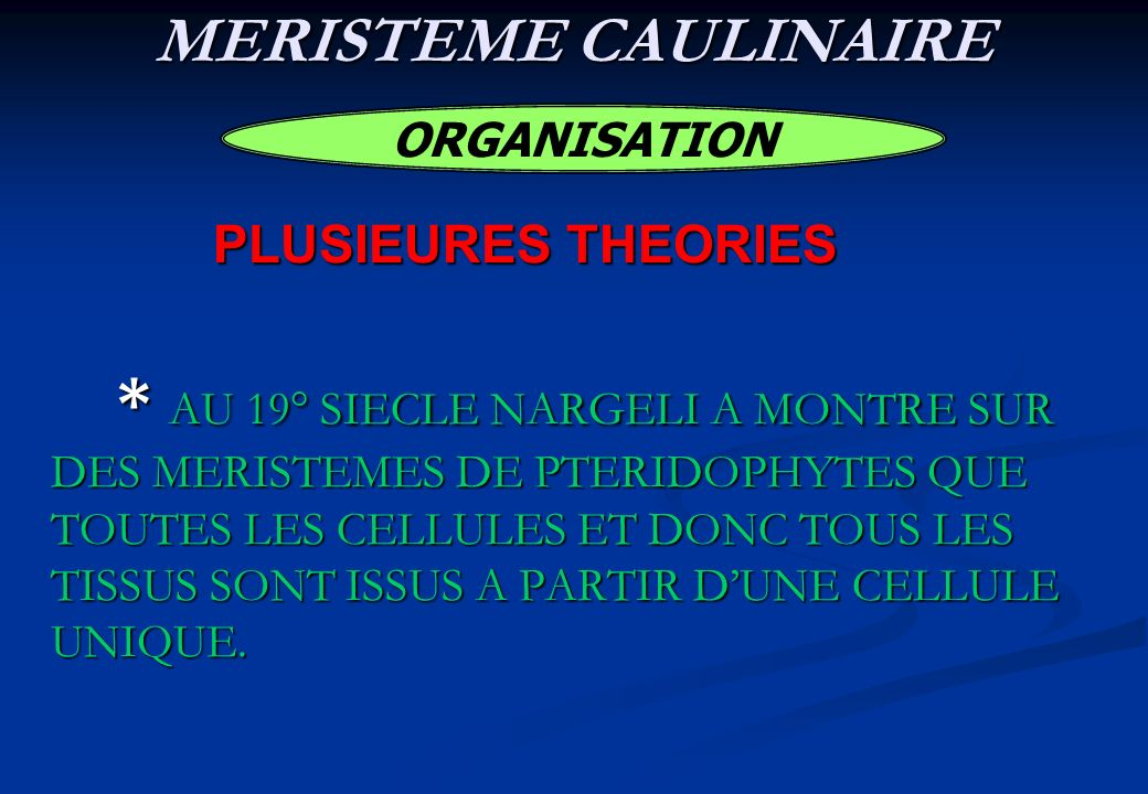 MERISTEME CAULINAIRE PLUSIEURES THEORIES ORGANISATION