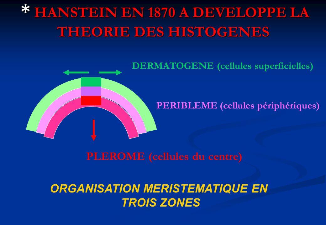 * HANSTEIN EN 1870 A DEVELOPPE LA THEORIE DES HISTOGENES