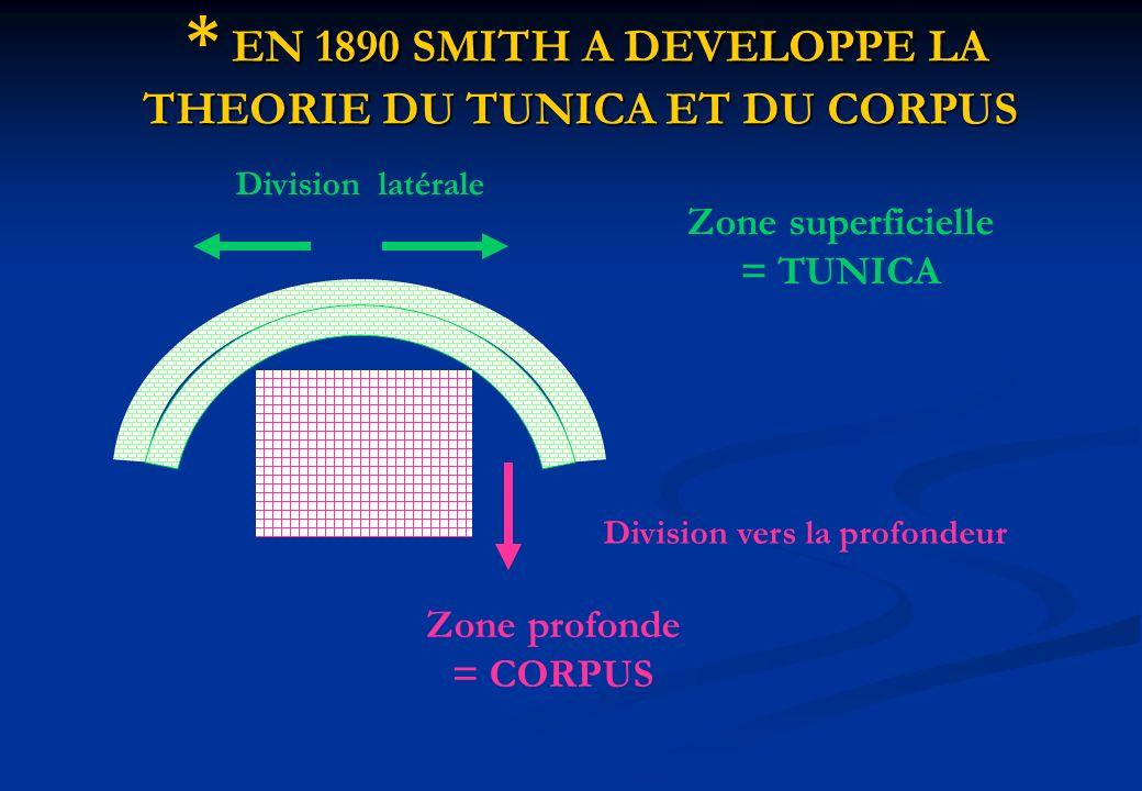* EN 1890 SMITH A DEVELOPPE LA THEORIE DU TUNICA ET DU CORPUS