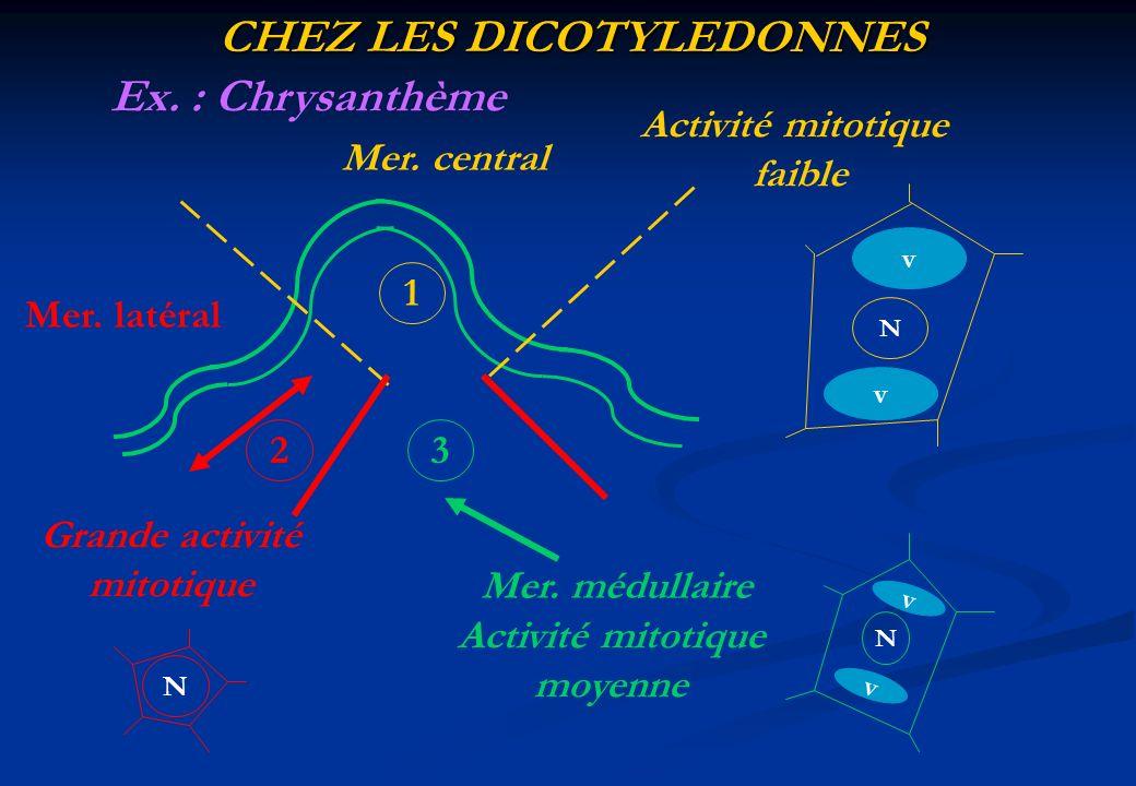 CHEZ LES DICOTYLEDONNES