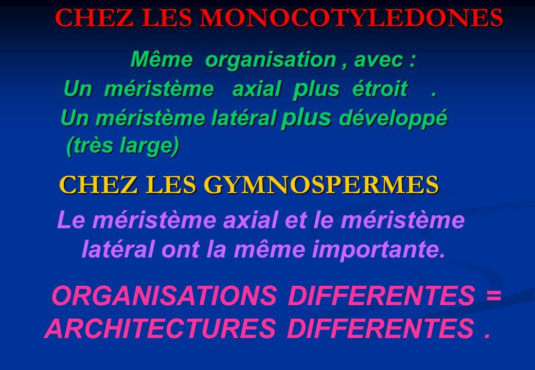 CHEZ LES MONOCOTYLEDONES