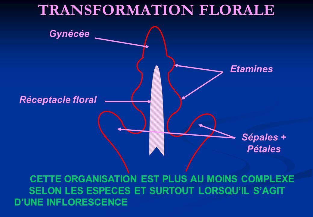 TRANSFORMATION FLORALE