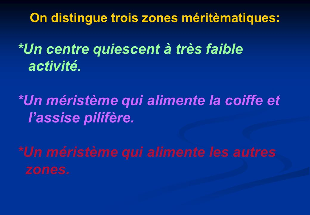 On distingue trois zones méritèmatiques: