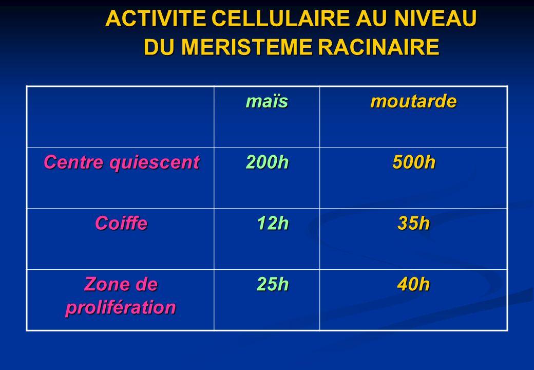 ACTIVITE CELLULAIRE AU NIVEAU DU MERISTEME RACINAIRE
