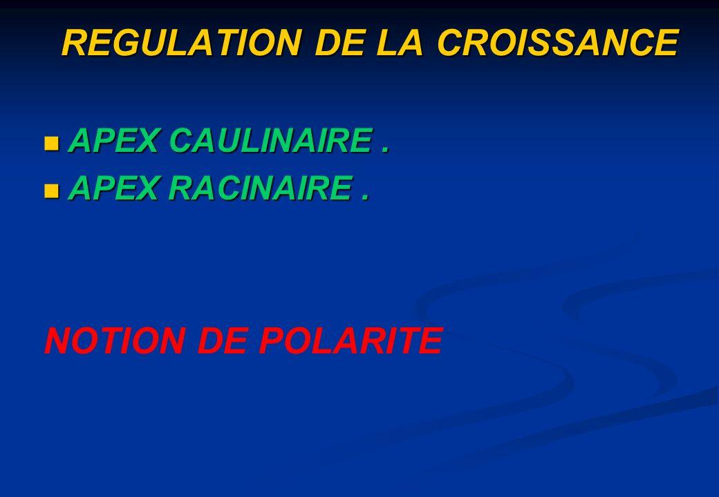 REGULATION DE LA CROISSANCE