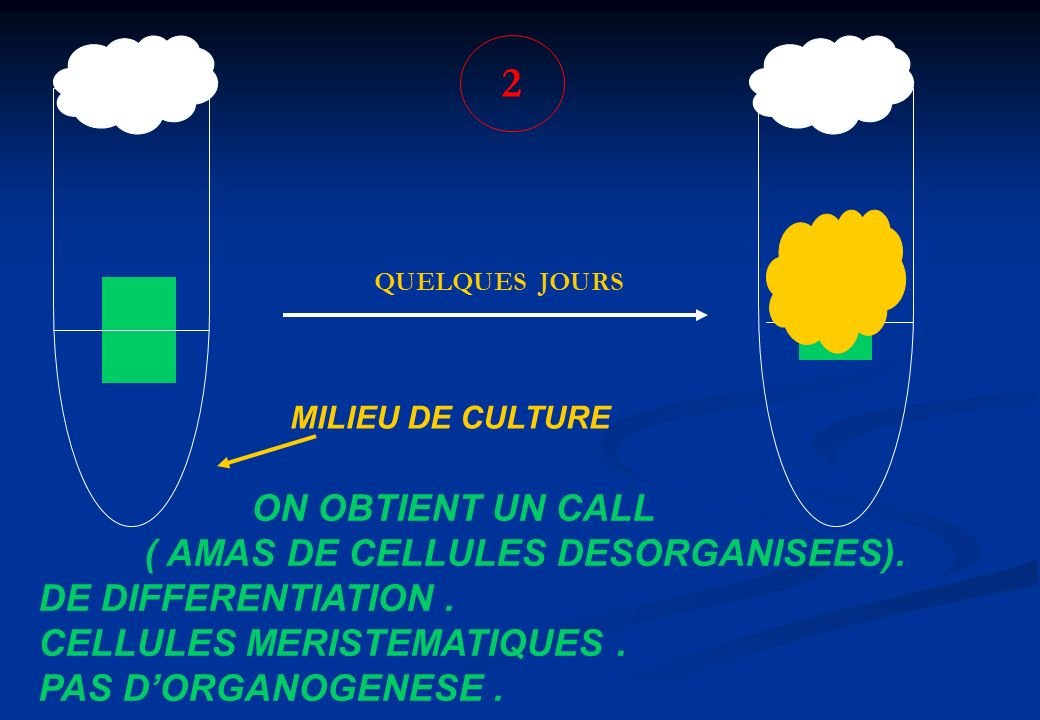2 ON OBTIENT UN CALL ( AMAS DE CELLULES DESORGANISEES).