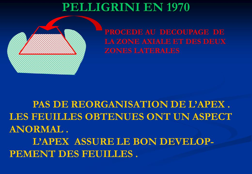 PELLIGRINI EN 1970 PAS DE REORGANISATION DE L'APEX .