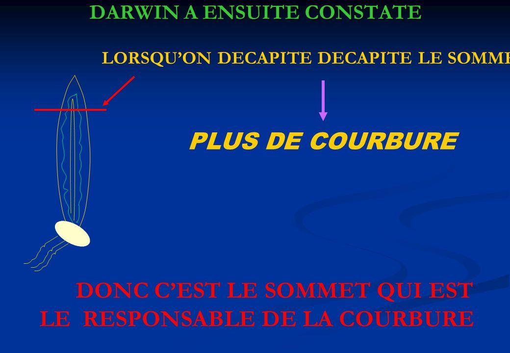 DARWIN A ENSUITE CONSTATE