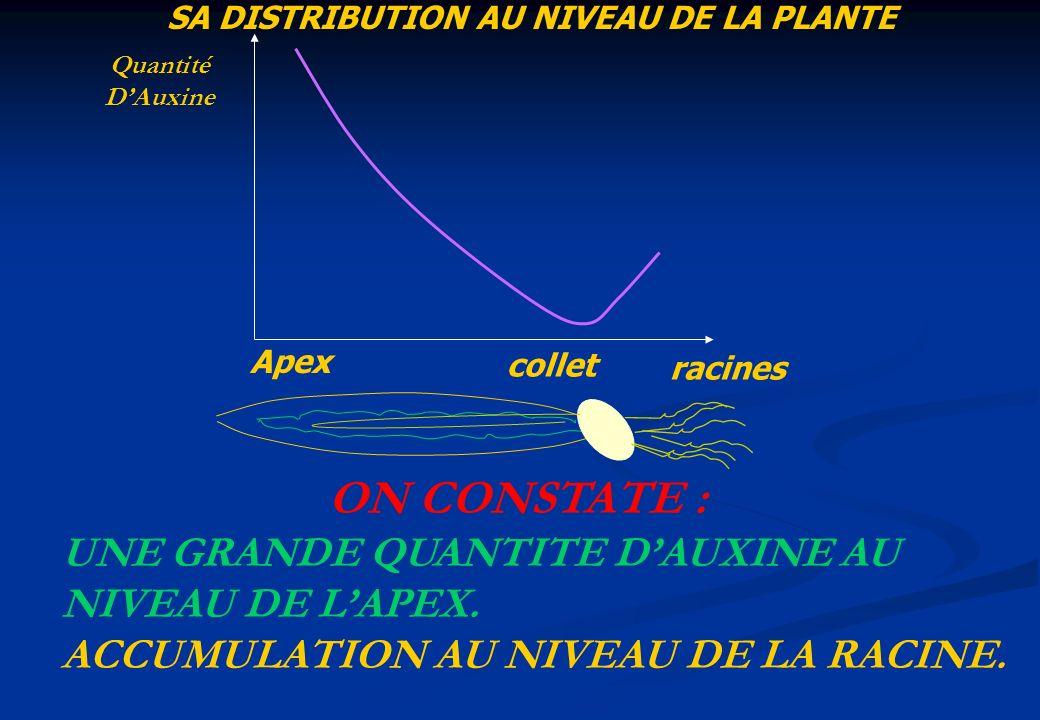 SA DISTRIBUTION AU NIVEAU DE LA PLANTE