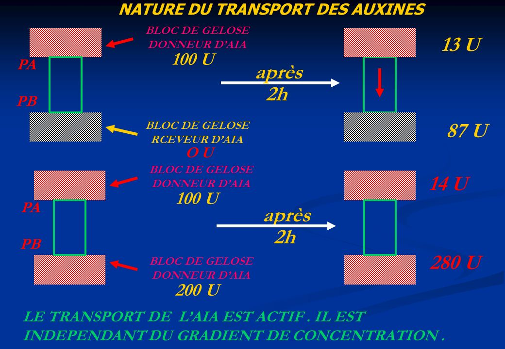 NATURE DU TRANSPORT DES AUXINES