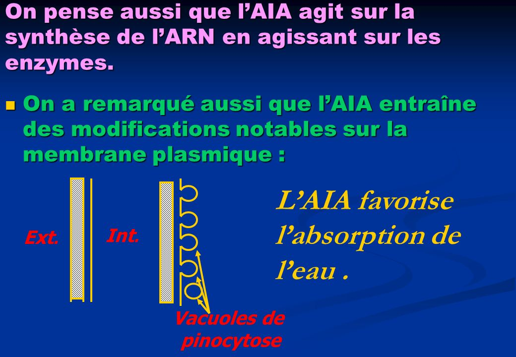 L'AIA favorise l'absorption de l'eau .