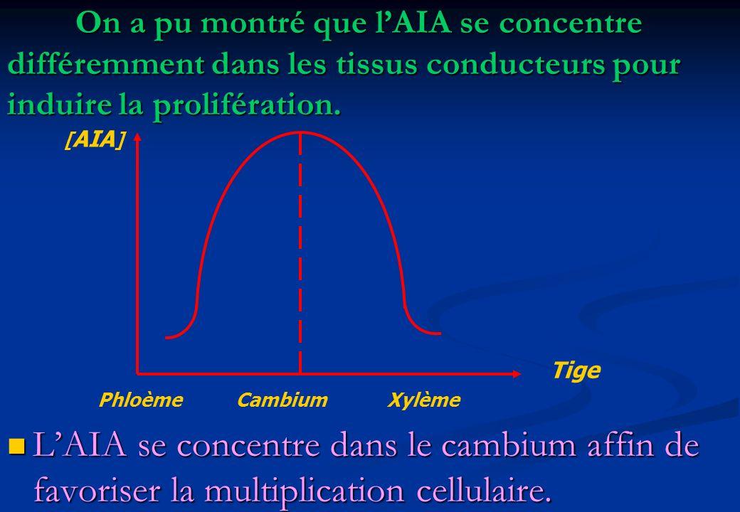 On a pu montré que l'AIA se concentre différemment dans les tissus conducteurs pour induire la prolifération.