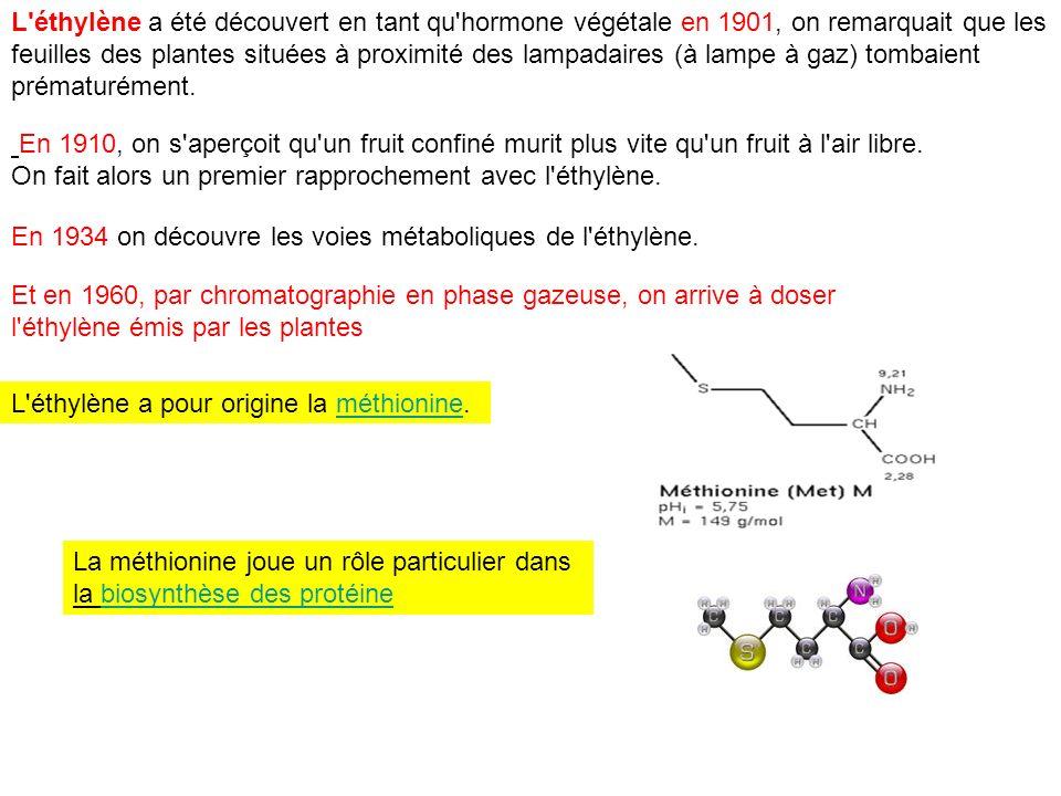 L éthylène a été découvert en tant qu hormone végétale en 1901, on remarquait que les feuilles des plantes situées à proximité des lampadaires (à lampe à gaz) tombaient prématurément.