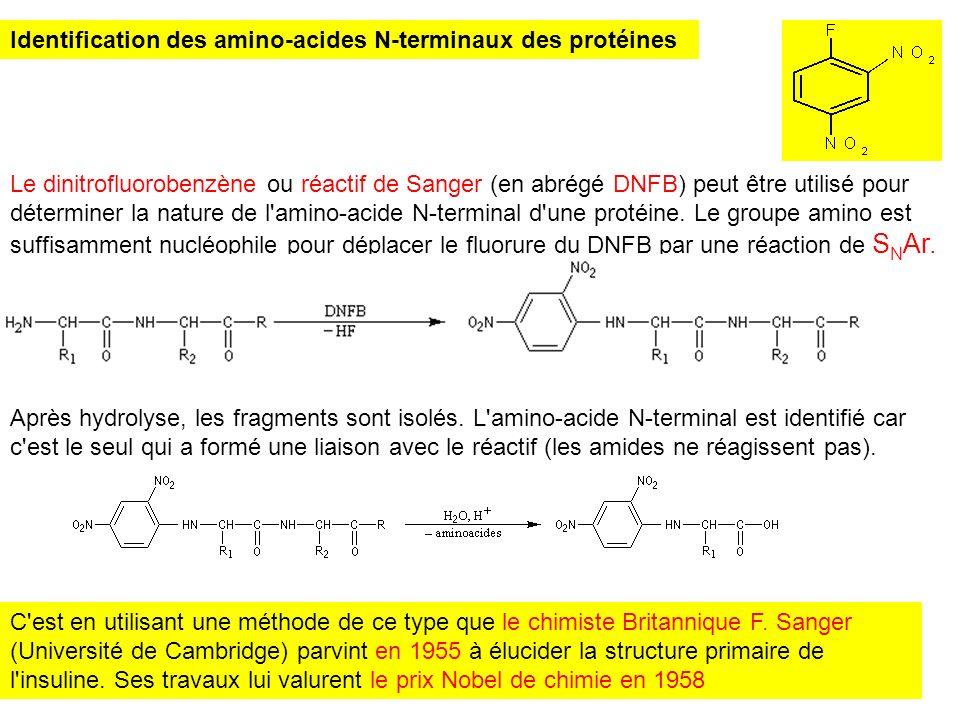 Identification des amino-acides N-terminaux des protéines