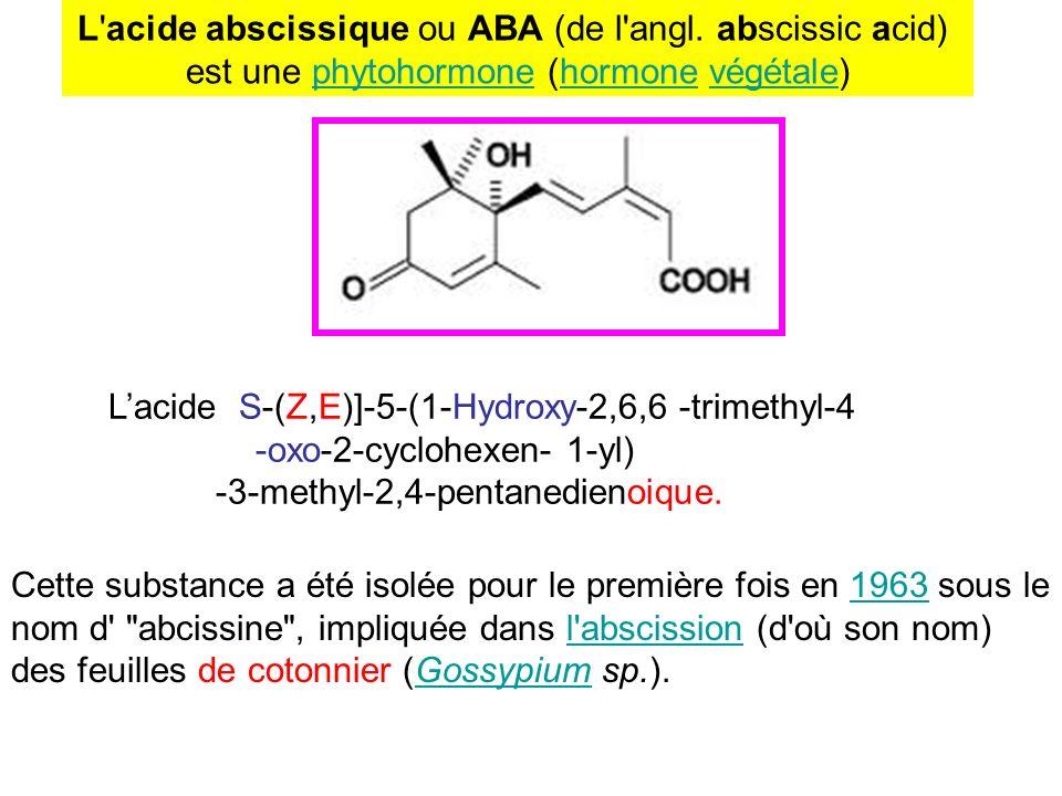 L acide abscissique ou ABA (de l angl. abscissic acid)