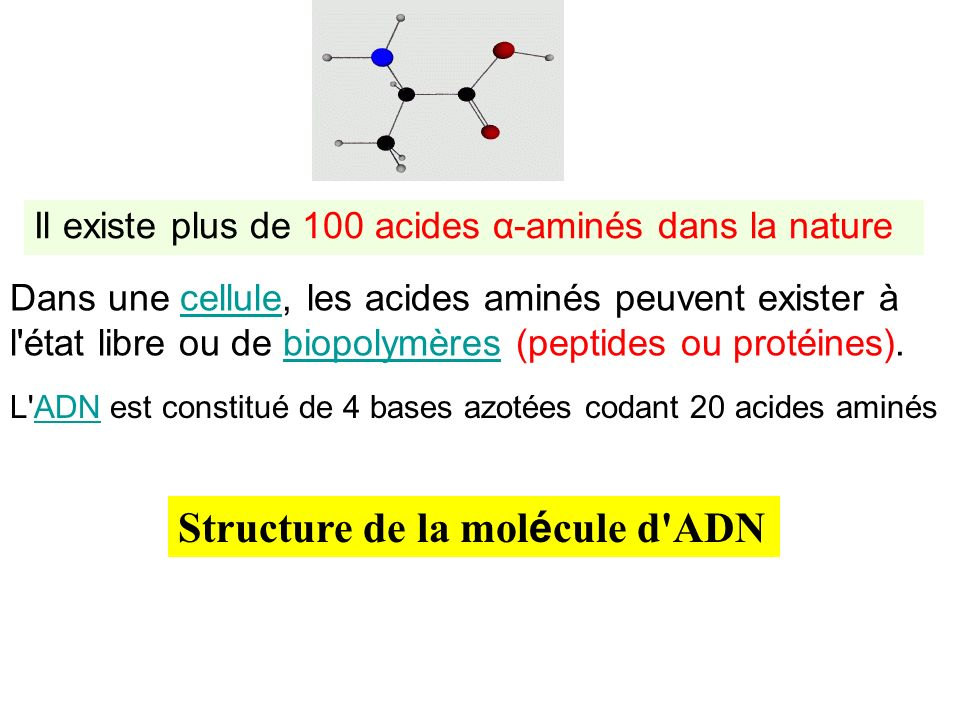 Structure de la molécule d ADN