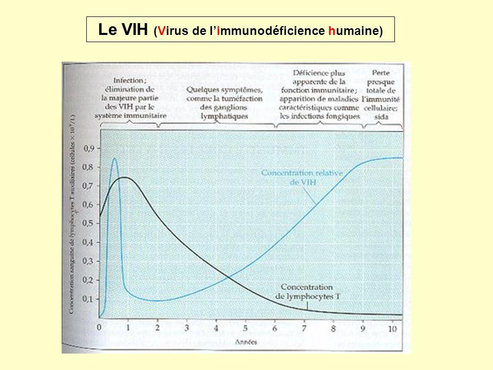 Le VIH (Virus de l'immunodéficience humaine)
