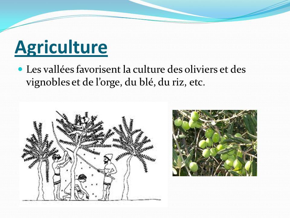 Agriculture Les vallées favorisent la culture des oliviers et des vignobles et de l'orge, du blé, du riz, etc.