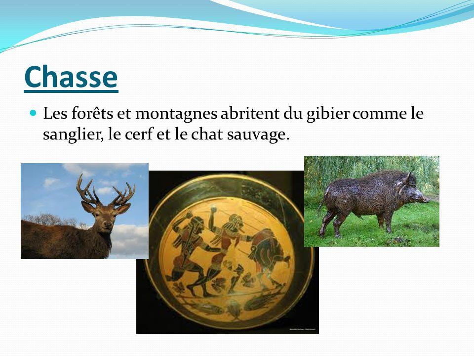Chasse Les forêts et montagnes abritent du gibier comme le sanglier, le cerf et le chat sauvage.