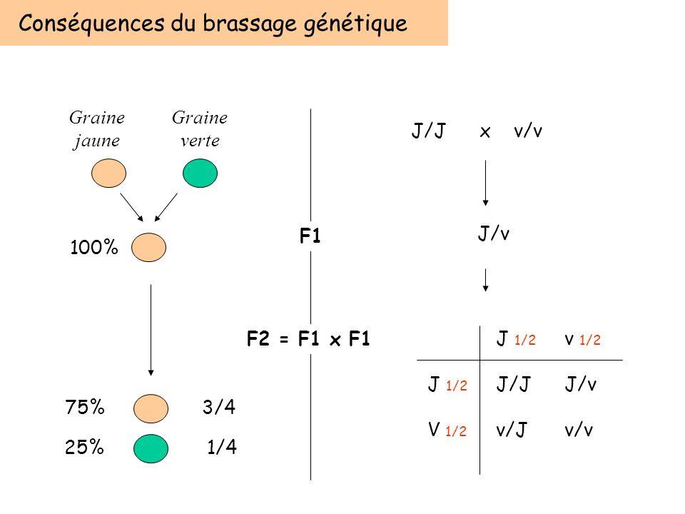 Conséquences du brassage génétique