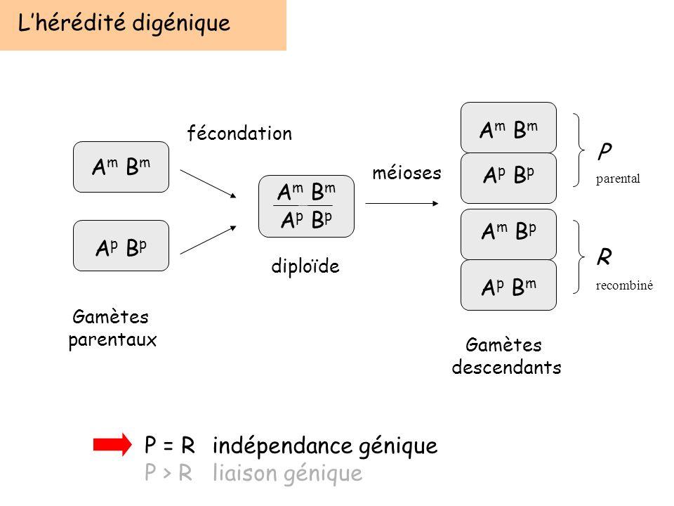P = R indépendance génique P > R liaison génique
