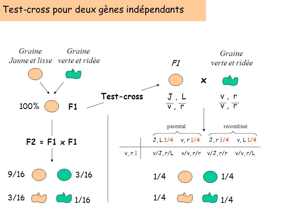 Test-cross pour deux gènes indépendants