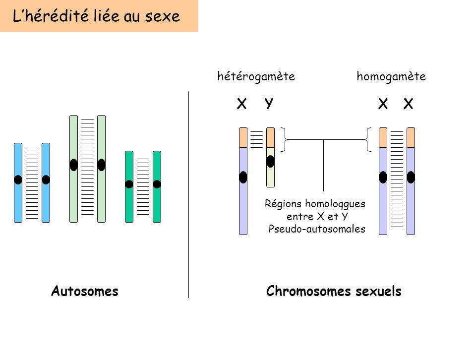 L'hérédité liée au sexe