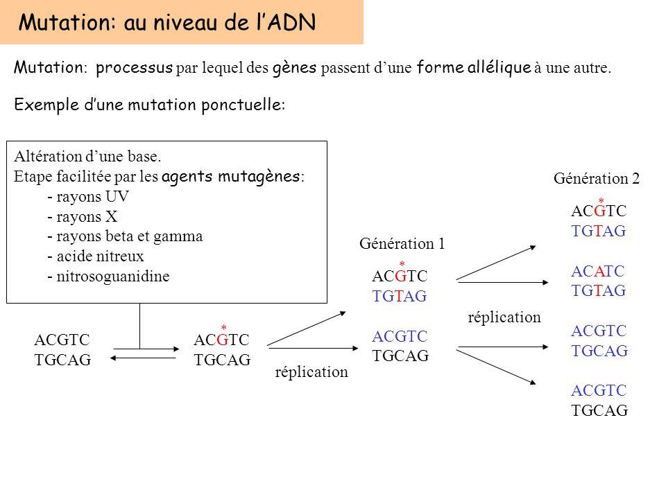 Mutation: au niveau de l'ADN