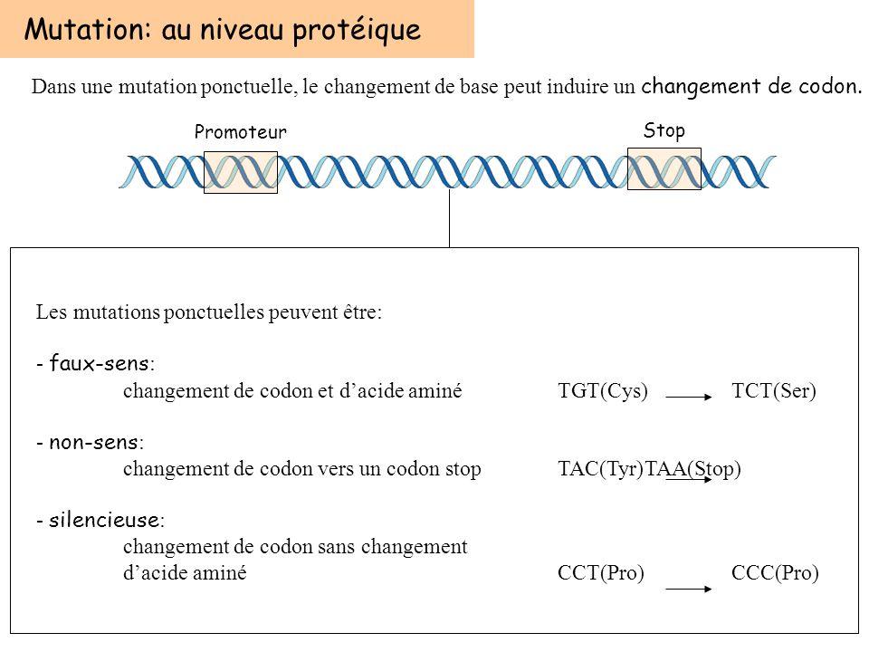 Mutation: au niveau protéique