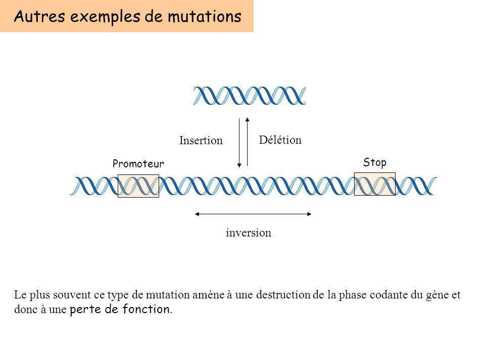 Autres exemples de mutations