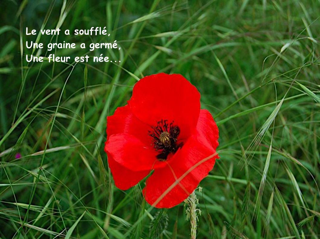 Le vent a soufflé, Une graine a germé, Une fleur est née...