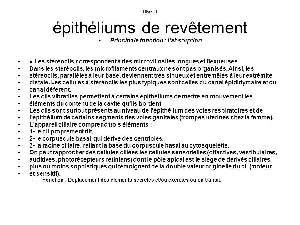 Histo11 épithéliums de revêtement