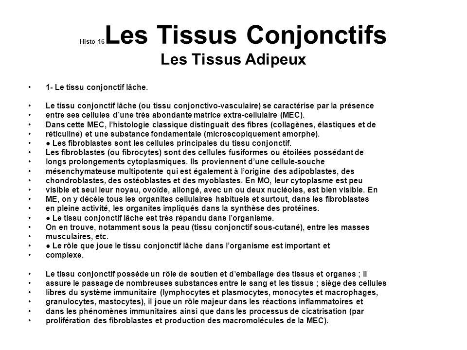 Histo 16Les Tissus Conjonctifs Les Tissus Adipeux