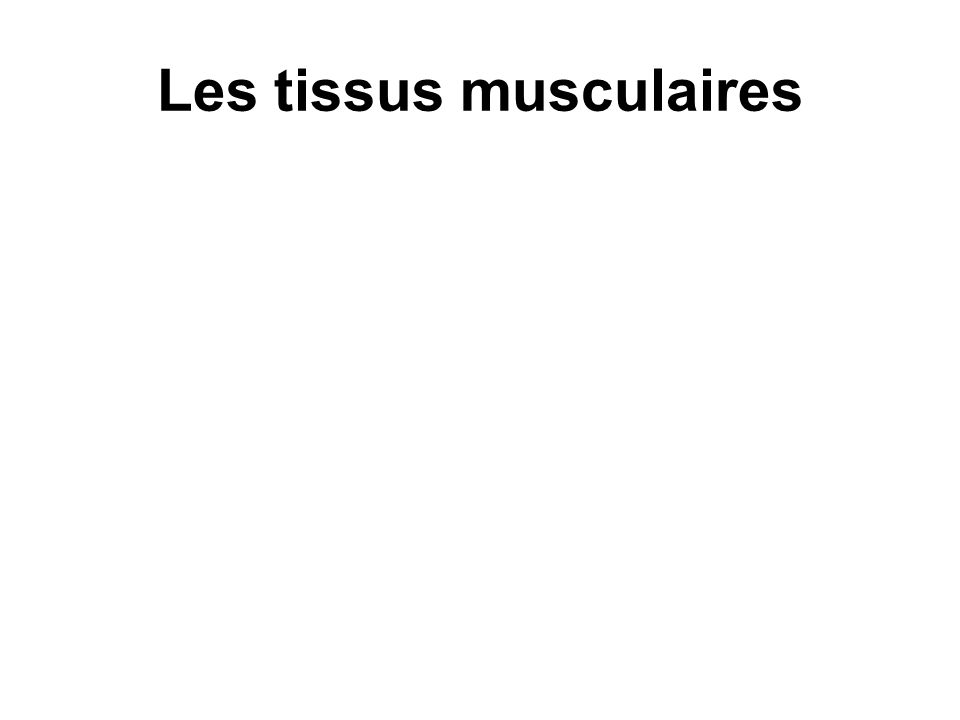 Les tissus musculaires