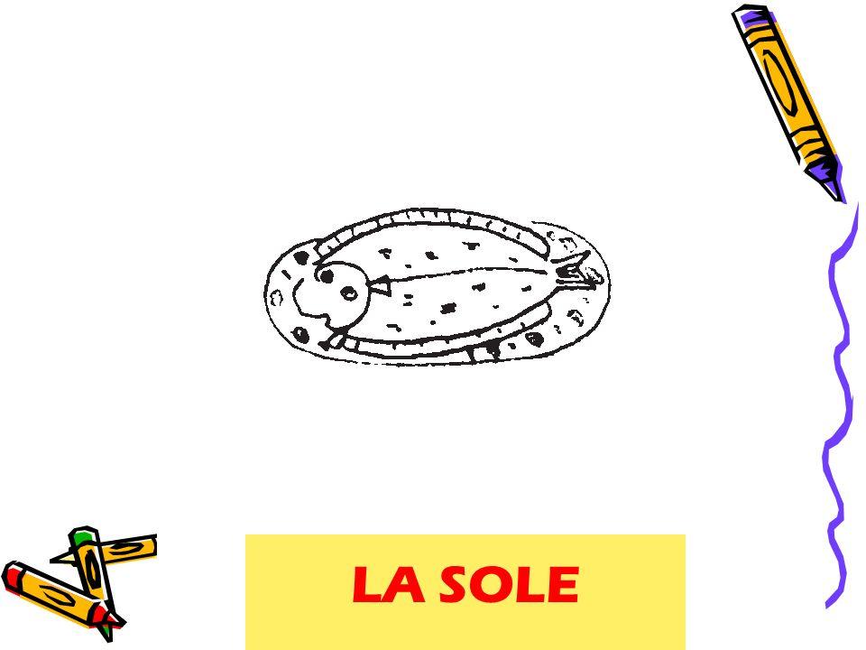 LA SOLE sole