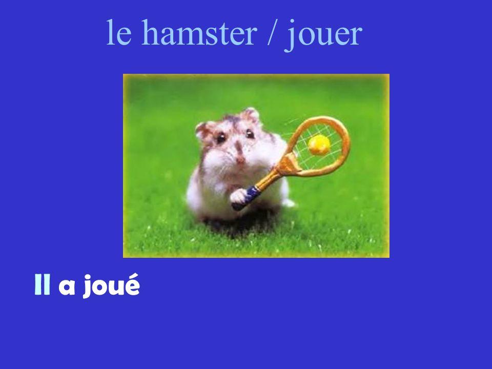 le hamster / jouer Il a joué