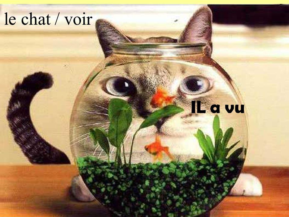 le chat / voir IL a vu