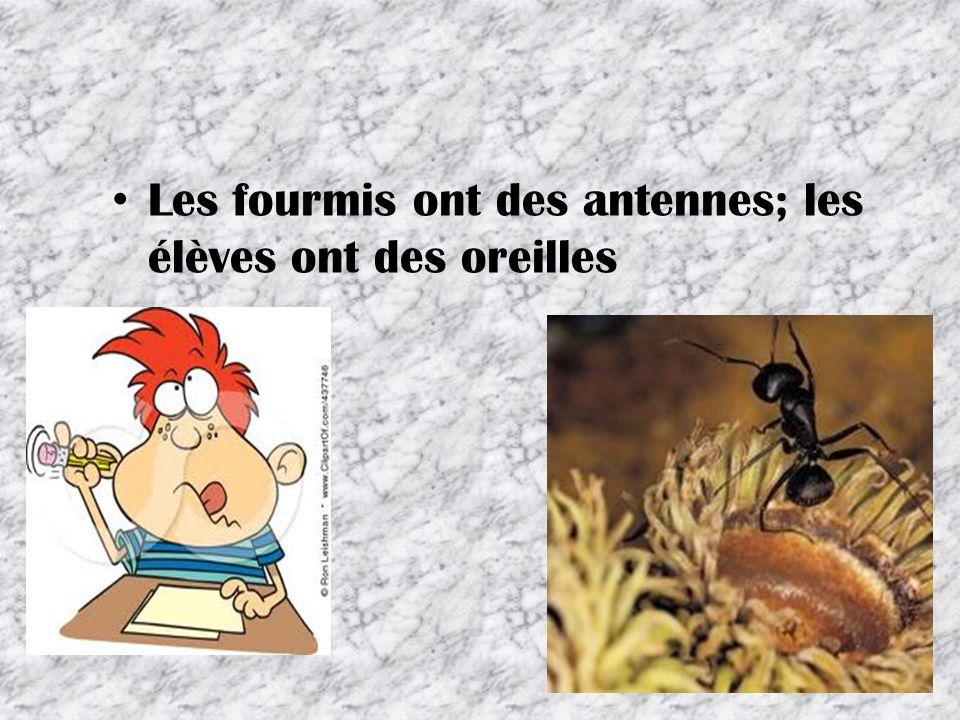 Les fourmis ont des antennes; les élèves ont des oreilles